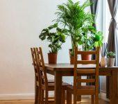 Izbira sobne rastlin, ki poskrbijo za boljše počutje